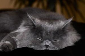 Beter slapen voor meer tijd en energie
